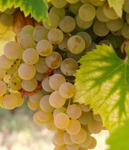 Italian Wine Tour Pic